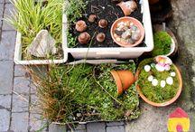 Növény, kert