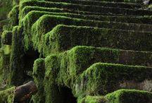 Moss  ♥