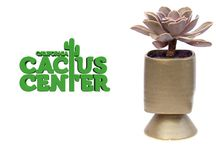Succulent Video Library / 0