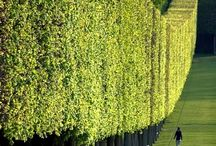 I love long perfectly cut tall hedges. looks like an elegant lady