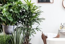 Plants in interiors