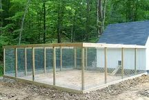 CHICKEN COOP / by Amanda Crenshaw
