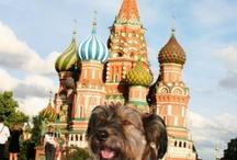Mascotas viajeras :) / Porque ellos también viajan ¡Nos llevamos a nuestras mascotas de #viaje!