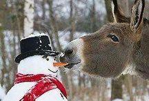 Christmas ... neige ...