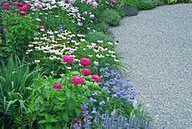 Záhony - zahrada