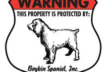 Boykin Spaniel Signs and Pictures / Warning and Caution Boykin Spaniel Signs. https://www.signswithanattitude.com/boykin-spaniel-signs.html
