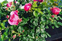 Gardening / Love a beautiful garden.