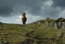 """LEXA Fotowettbewerb 2013 / Unter dem Motto """"Mein schönstes Pferdefoto"""" suchten wir 12 Kandidaten für unseren Wandkalender!"""
