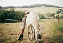 ~Horses~ / Photography including horses
