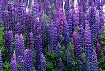 Wild flower colors