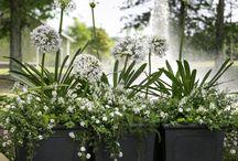 Giardini in vaso