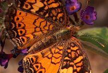 Vlinder paradijs