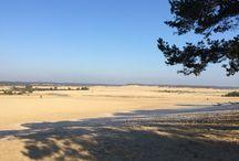 Loonse en Drunense Duinen / Een heel mooi West Europees levend stuifzandgebied