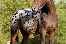 Häst / Allt till häst
