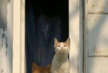 cats in window.......