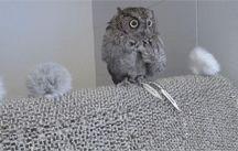 Owl gifs