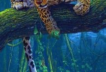 Macan & Singa