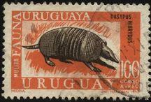 URUGUAY NATURAL / Flora, fauna y paisajes naturales de Uruguay / by Alicia Lanzani