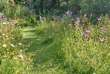 Blommor å trädgård
