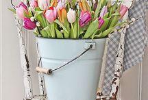Tulpen pop up