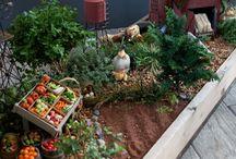 Minnie farm garden