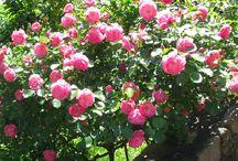 Gardening / That I love!!