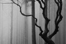 Extraordinary Trees