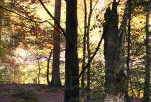 Autumn. / Autumn