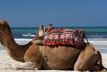 Tunisia / Offerte Tunisia Last Minute Viaggi Pacchetti Volo più Hotel o Villaggi All Inclusive Con Sconti fino al 70%