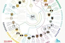Evolution / Images, ideas, provocations about evolution