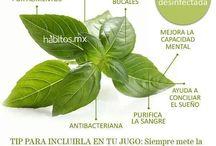 plantas nedicinales