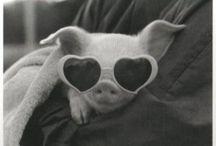piggy <3