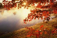 Fall / Awesome autumn!