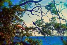 Bonaire Favorites