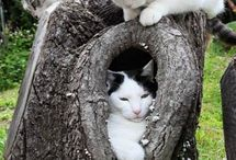 Fofura, animais, gatos