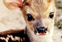 Bebek hayvanlar