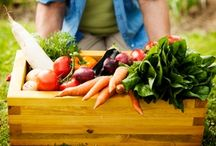 Grow our food