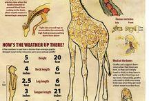 tarea jirafa