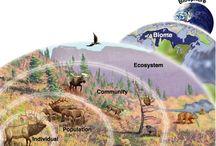 Ecological Thinking