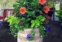 Pot flowers ideas