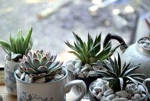 Cacti & Succulents.