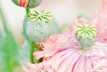 Flowers & cute things