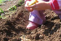 gardening / Gardening, homesteader gardening, tips, tricks