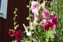 Fleurs , jardinage