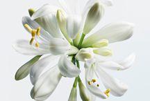 Ingredients (fragrances & beauty)