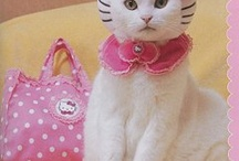fashionista cats