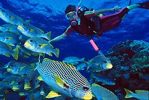 Diving / some beautiful pictures from a divers eye