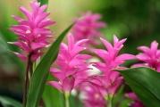Flowering Tropical Plants / Beautiful flowering tropical plants
