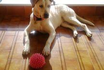 My dog Roxy <3