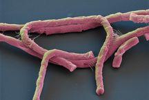 Microbiológia